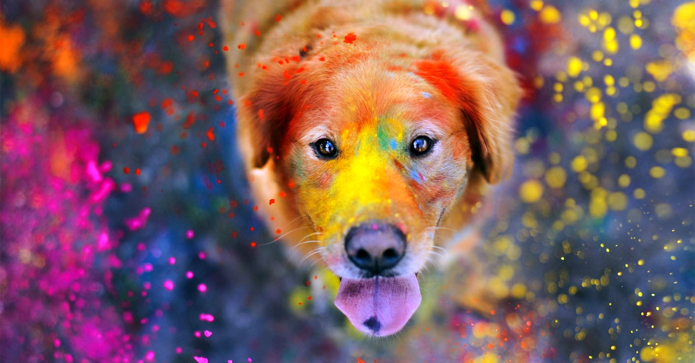 Svarīgākās dzīves mācības, kuras jūs varat iemācīties no sava suņa