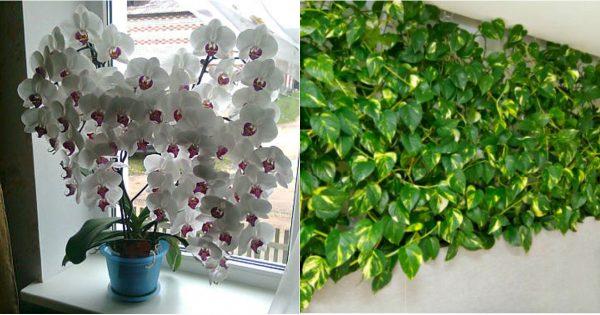 Izmēģiniet šo vienkāršo barības vielu maisījumu saviem augiem, un būsiet pārsteigti, cik skaisti tie kļūs!