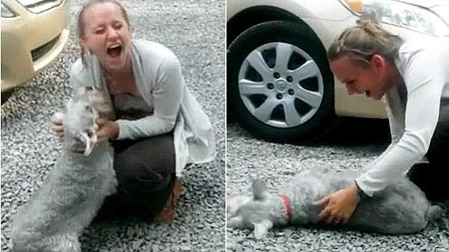 Šis suns noģība, ieraugot saimnieci, kuru nebija redzējis 2 ilgus gadus!