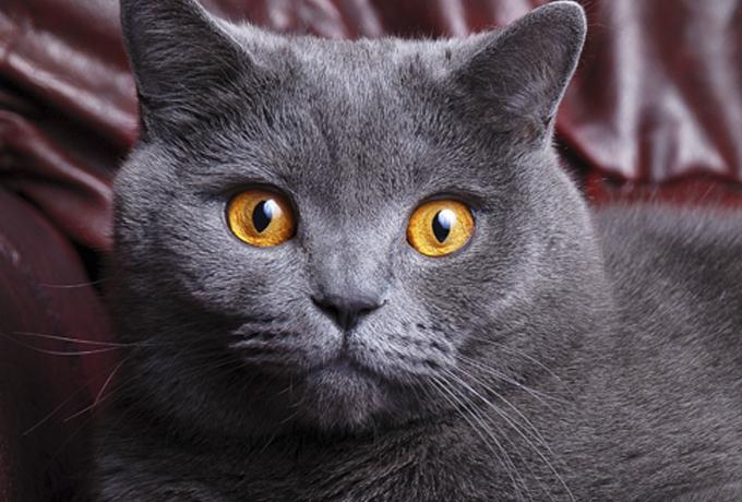 Kaķis ir cilvēka labklājības rādītājs
