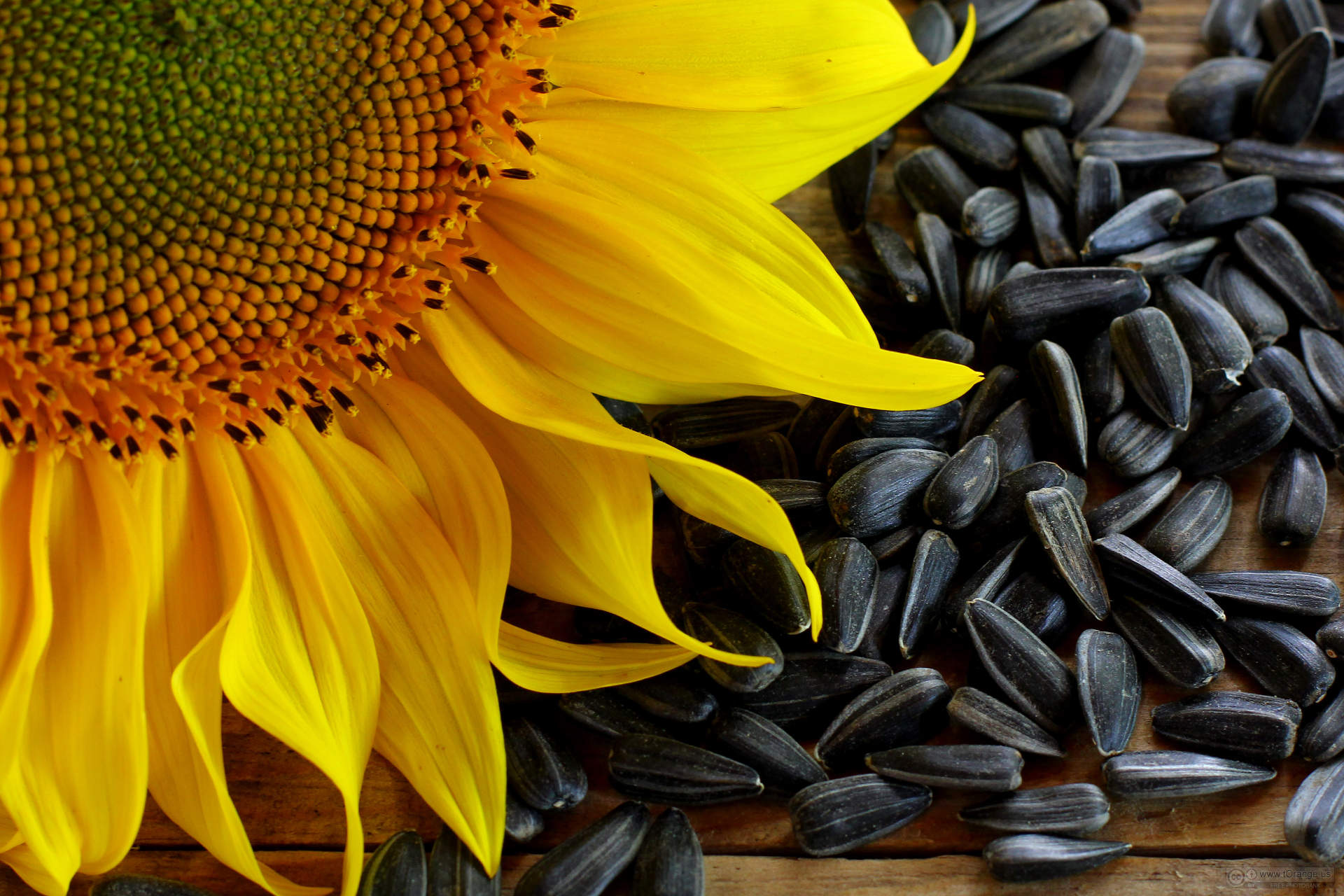 wallpaper on the desktop for the lover of sunflower seeds