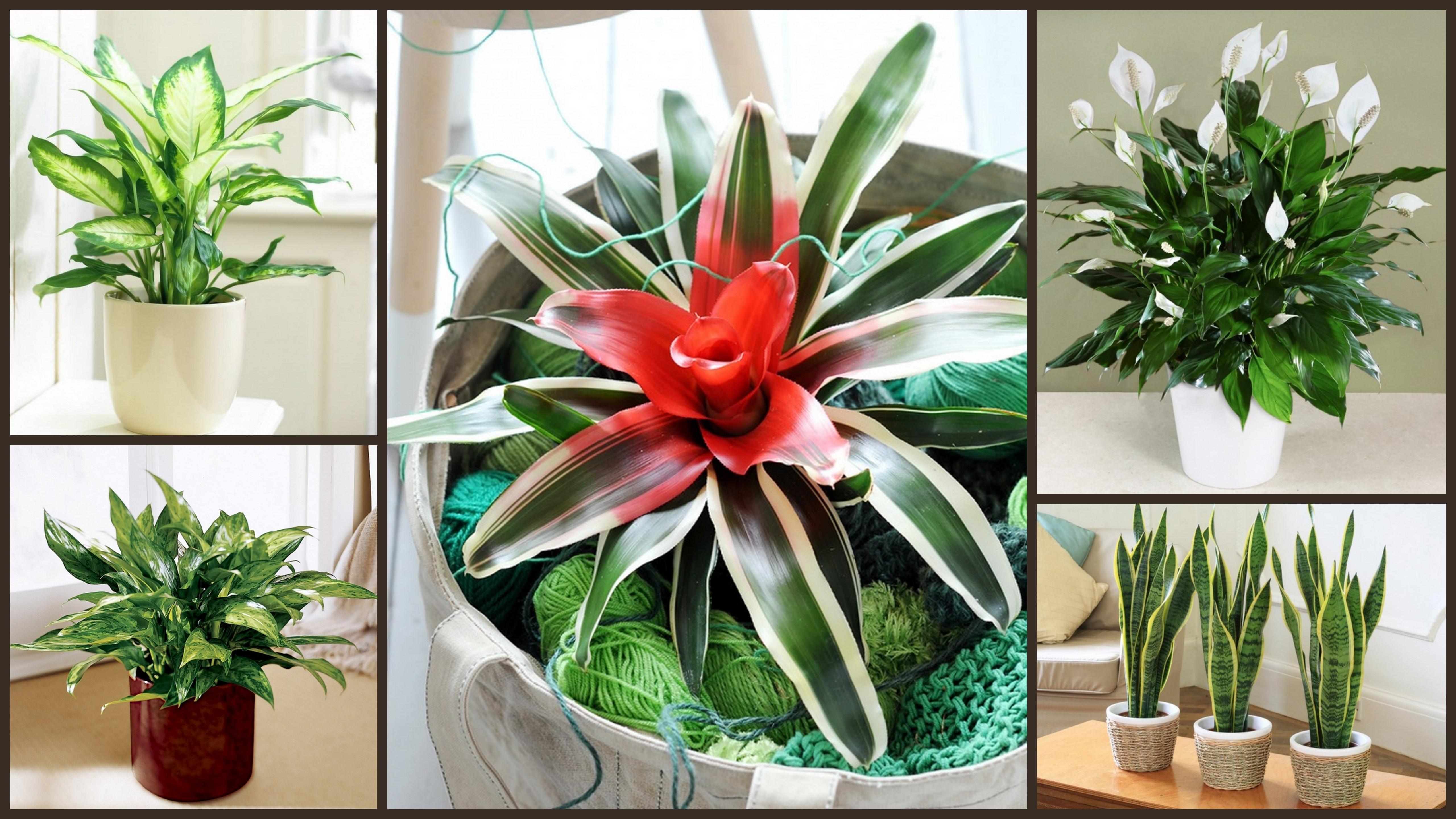12 istabas augi, kas spēj izdzīvot pat vistumšākajā stūrī