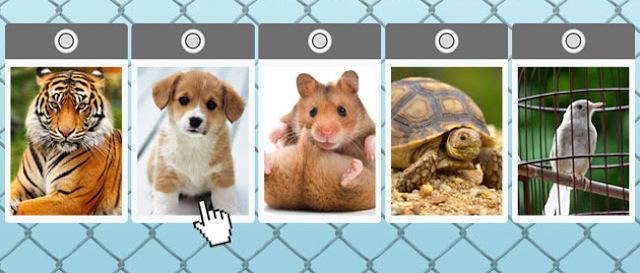TESTS: Kuru no šiem dzīvniekiem jūs adoptētu? Atbilde noteiks jūsu patreizējo dvēseles stāvokli