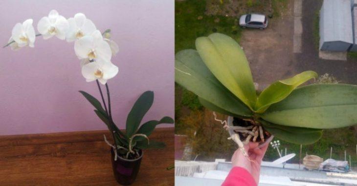 Lūk, kāpēc es atbrīvojos no visām orhidejām! Var rasties problēmas…