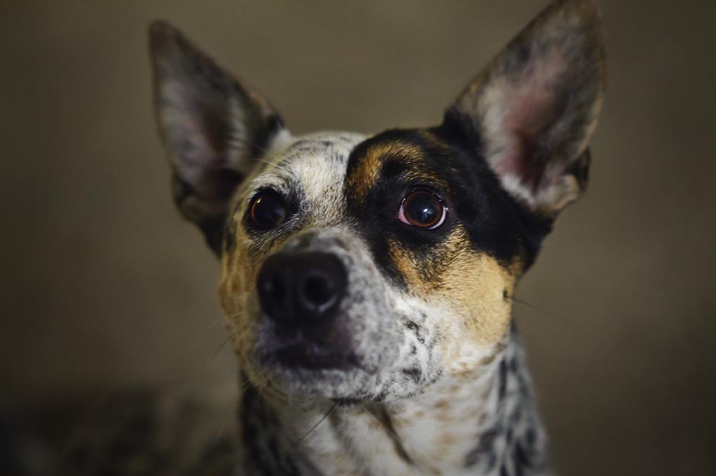 """Zinātne ir apstiprinājusi un paskaidrojusi, kādā veidā suņi atpazīst """"sliktus"""" cilvēkus"""