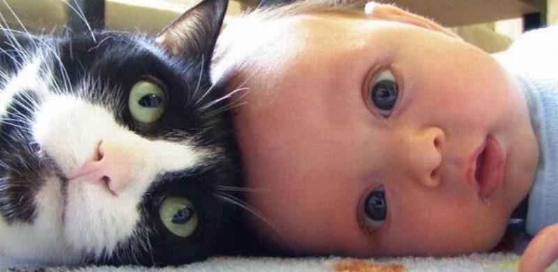 20 iemesli, kādēļ katram bērnam nepieciešams kaķis