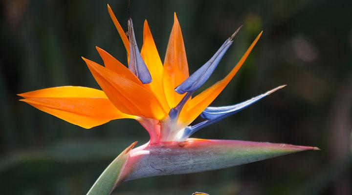 15 dārza un istabas augi, kuri ir ārkārtīgi indīgi mūsu četrkājainajiem mīluļiem