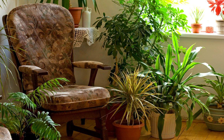 Ar šiem istabas augiem mājās būs vēsi arī bez kondicioniera!