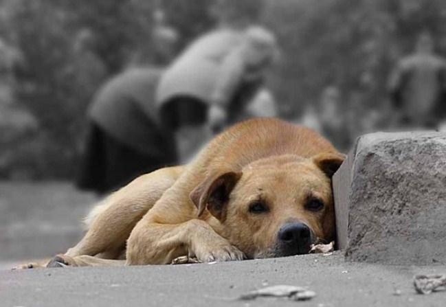 Itālijā sods par pamestu mājdzīvnieku ir 10 tūkstoši eiro vai arī 1 gads cietumā!