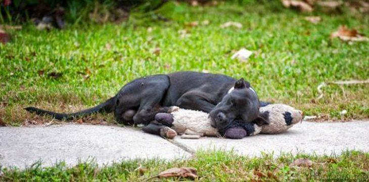 Viņa pamanīja klaiņojošu suni, kas gulēja uz ietves un bija apskāvis mantiņu. Šī bilde ātri vien pāršalca visu internetu