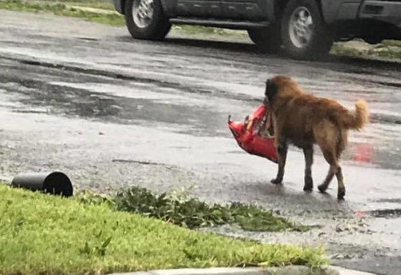 Viņa ieraudzīja uz ielas kaimiņu pazudušo suni, kas zobos nesa kaut ko pārsteidzošu…