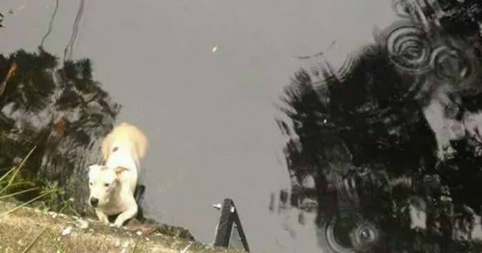 Kad viņi mēģināja izvilkt suni no upes, viņi pēkšņi saprata – zem ūdens ir vēl kāds