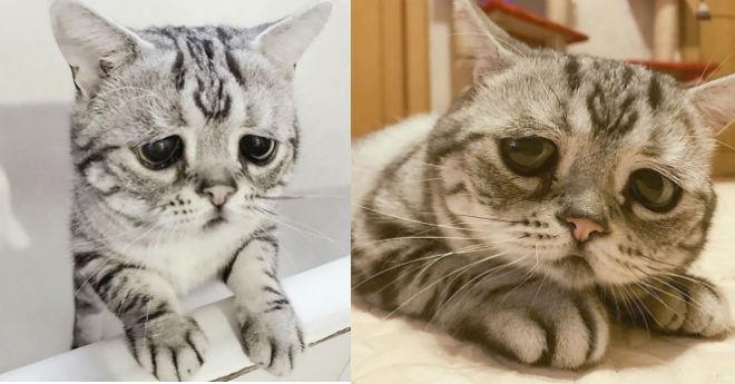 Pats bēdīgākais kaķēns pasaulē, kurš noteikti spēs aizkustināt arī jūsu sirdis