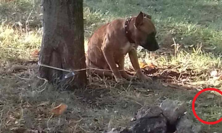 Uzticība un nodevība – parkā atrada pie koka piesietu suni, kuram blakus bija zīmīte