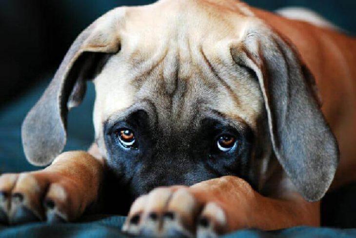Kāpēc suņi iet jums līdzi pat uz vannasistabu. Iemesls ir daudz nopietnāks, nekā jūs domājat