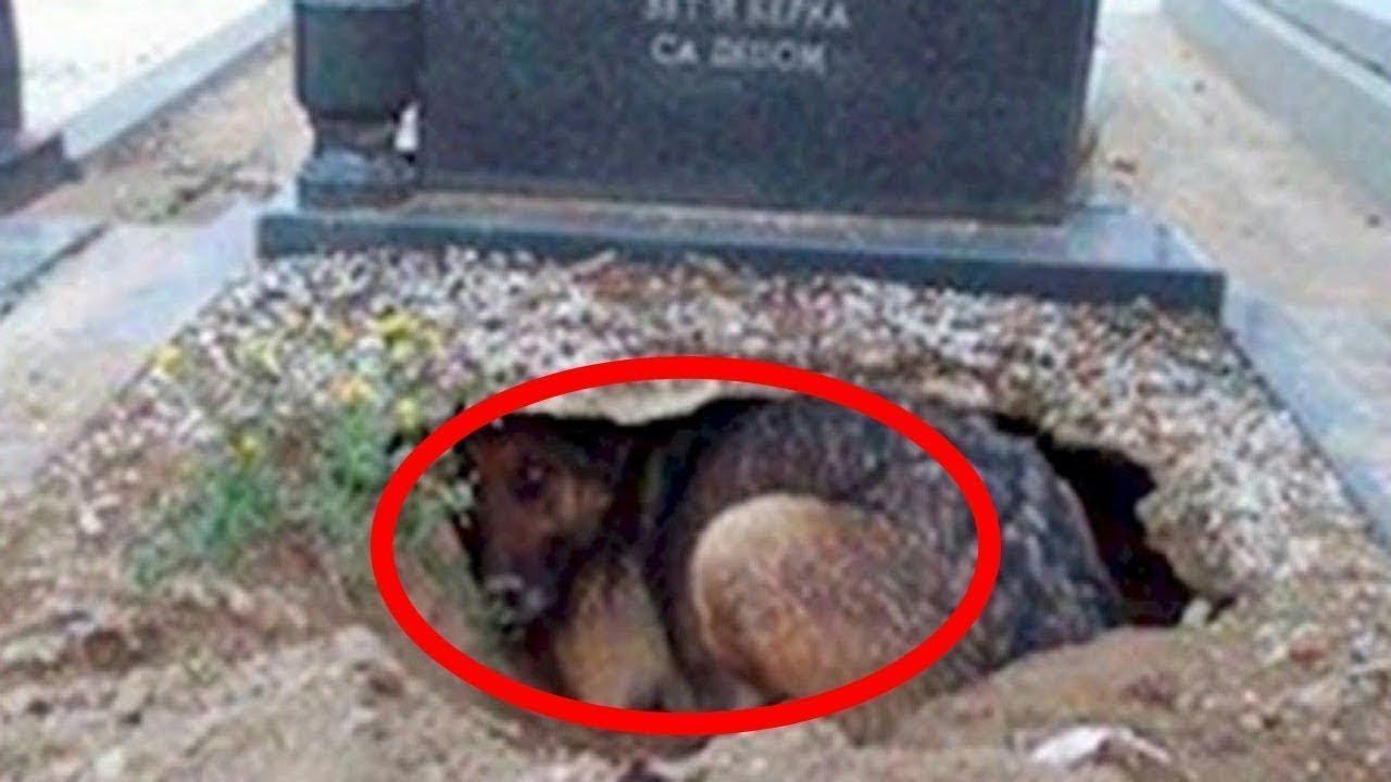 Viņi domāja, ka šis suns skumst pēc sava saimnieka, kamēr neieraudzīja, kas atrodas zem suņa!