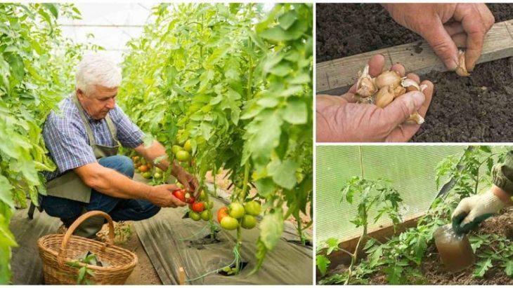 Kefīrs, cukurs, sāls un ķiploks lielisks aizstās ķīmiskās viela dārzā