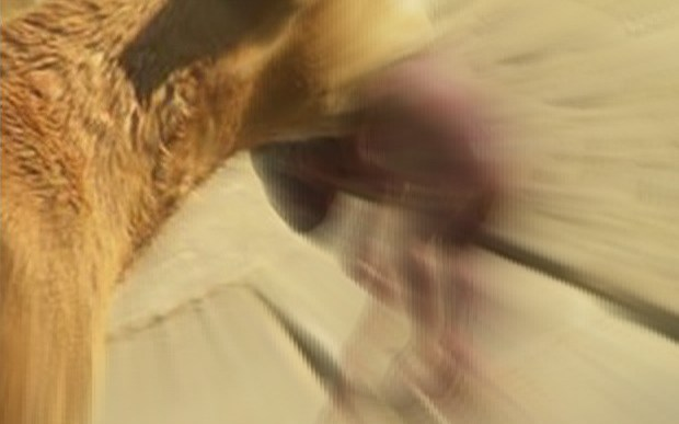 Kad cilvēki saprata, ko nes zobos suns, viņiem mati sacēlās stāvus.. Un tālākais pārsteidza vēl vairāk!