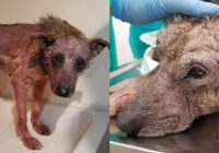 Šis suns mira no bada, bet jūs neticēsiet, kā viņš izmainījās