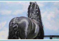No aizmugures viņš izskatās pēc parasta zirga, bet atliek viņam tikai pagriezties – visi iemīlas šajā skaistulī!