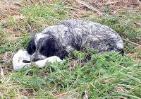 Vīrietis izglāba suni, kurš turēja zobos maisiņu. Viņš gandrīz apraudājās, kad ieskatījās tajā!