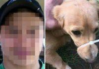 Kaut kāds mežonis sasēja suņa purniņu ar savilcēju un ielika to sociālajos tīklos