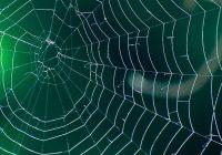 Paspēja noaust tīklu. Zirneklis iemitinājās ķīniešu pensionāra ausī