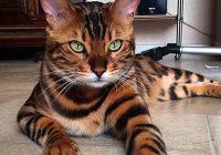 Kura kaķu šķirne ir piemērota tieši Tavai Zodiaka zīmei? Atver rakstu, un uzzini!