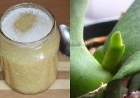 Ķiploku našķis orhidejām: bagātīga ziedēšana garantēta
