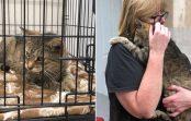 Ņujorkā atradās kaķis, kuru saimniece pazaudēja pirms 11 gadiem. Ilgi gaidīta tikšanās!