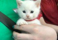 Mēs iegādājāmies kaķēnu dzīvnieku tirgū, un, kad viņš paaugās, viņam izauga neparastas ķepas