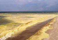 """Liepājas un Bernātu pludmalē vērojama fantastiska dabas parādība – """"Zelta jūra"""""""