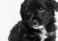 Labradors ar iesauku Burro tik ļoti vēlējās izkļūt no patversmes, ka iemācījās smaidīt