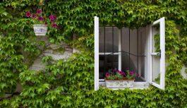 Siets logiem man vairs nav vajadzīgs. Vīra vecmamma iemācīja, kā nelaist mājās kukaiņus, pie atvērtiem logiem